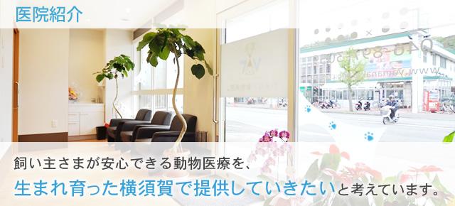 飼い主さまが安心できる動物医療を、 生まれ育った横須賀で提供していきたいと考えています。