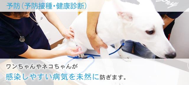 ワンちゃんやネコちゃんが感染しやすい病気を未然に防ぎます。