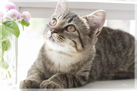 2.猫白血病ウイルス感染と猫免疫不全ウイルス感染症の予防接種