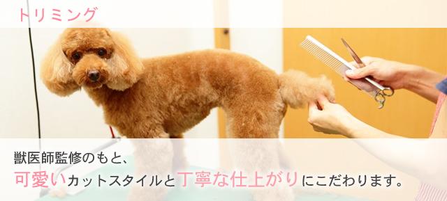 獣医師監修のもと、可愛いカットスタイルと丁寧な仕上がりにこだわります。