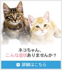 ネコちゃん、こんな症状ありませんか? 詳細はこちら